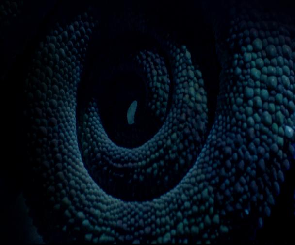 Turtle embryo - photo#14
